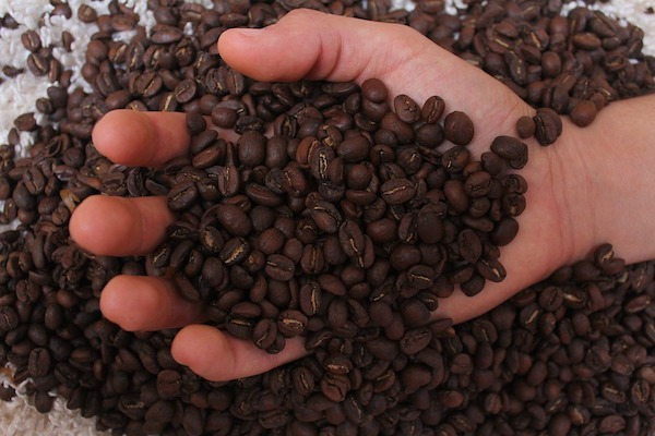 scooping coffee beans using hands - how much do coffee beans weigh