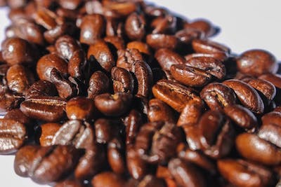 oily coffee beans