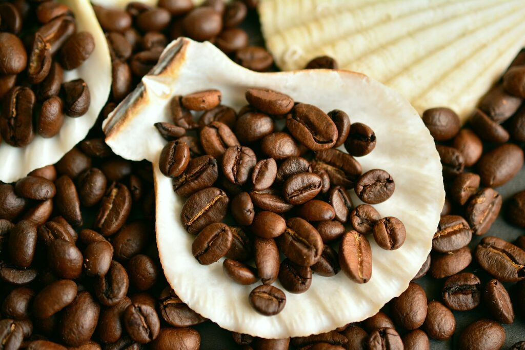 coffee beans on a shell