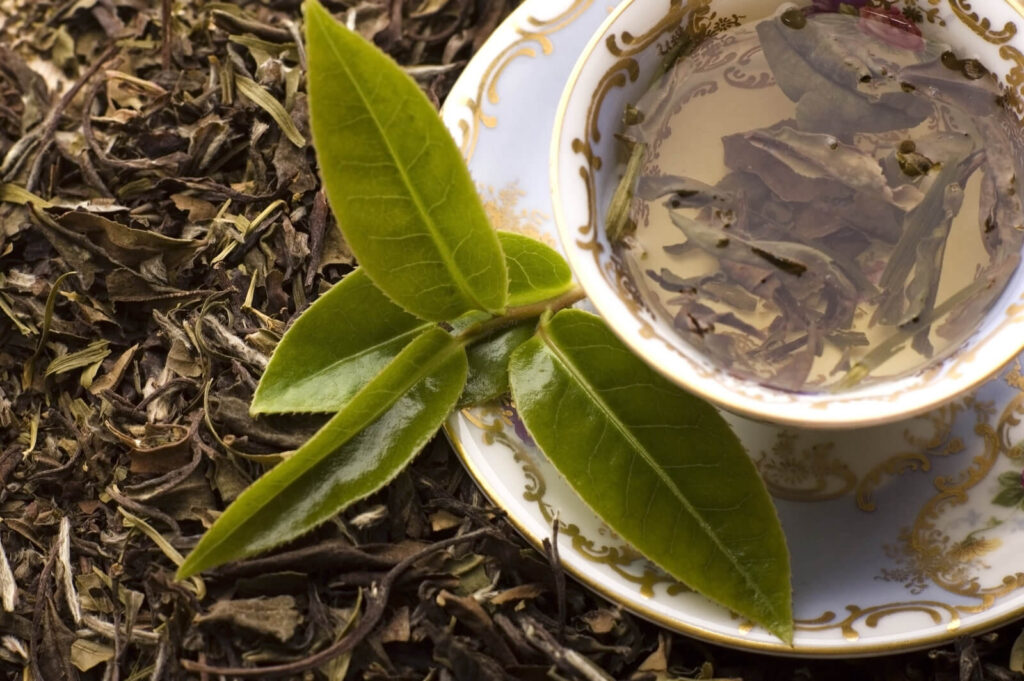 how many calories in unsweet tea - fresh and dried tea leaves