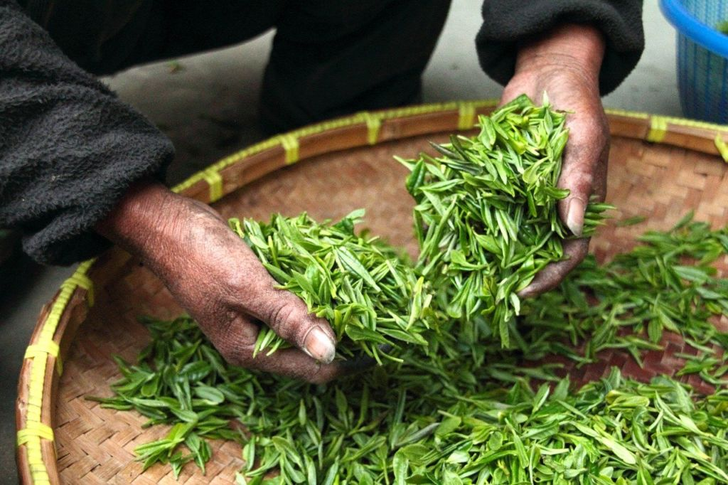 holding tea leaves on a round basket