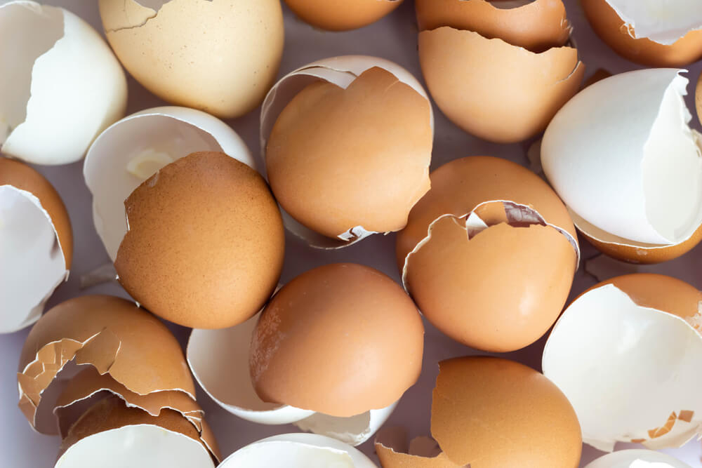 Close-up of white and brown eggshells