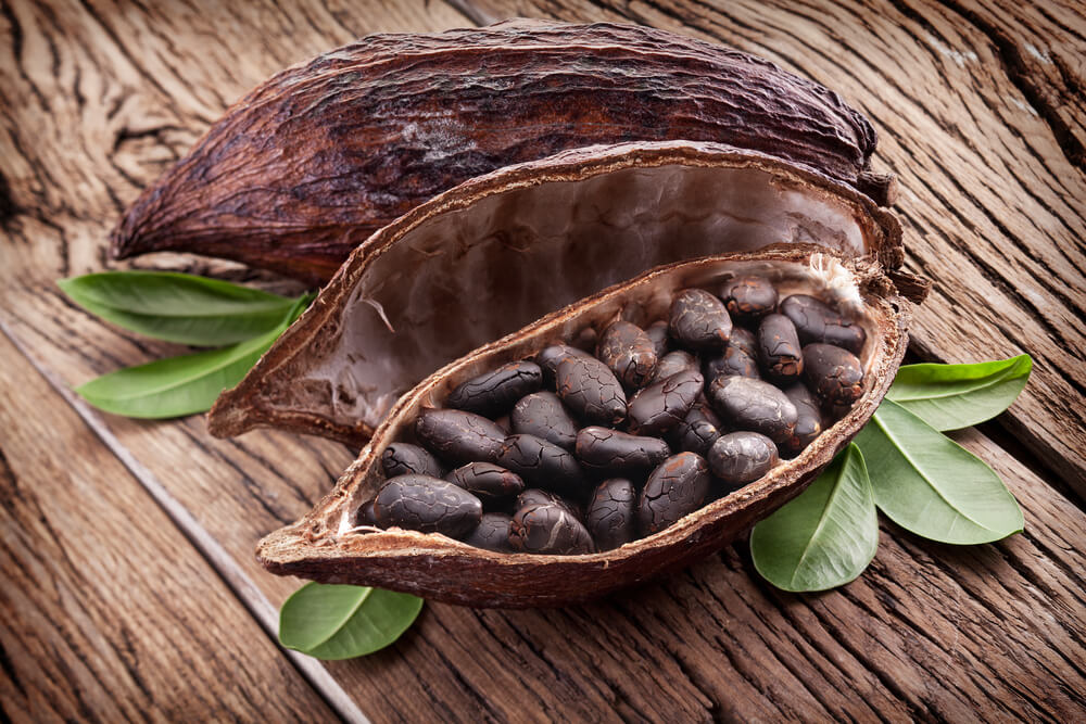 Cocoa pod in a wooden table. Coffee vs. Cacao.